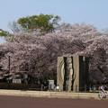 桜_公園 D8072