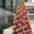 宝石の塔_植物園 D8320