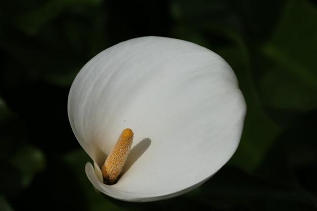 カラー_花壇 D8406