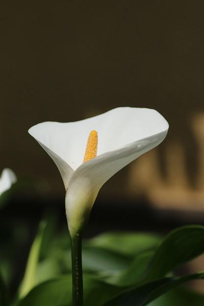 カラー_花壇 D8407