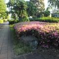 サツキ_公園 F5016