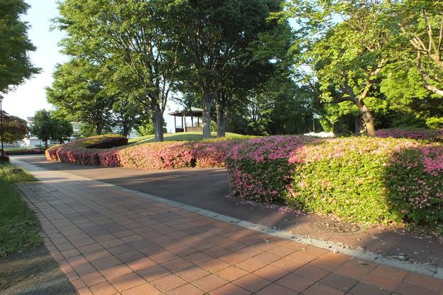 サツキ_公園 F5017