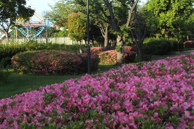サツキ_公園 F5023