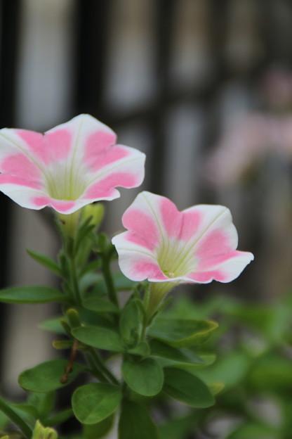花壇の花 D8744
