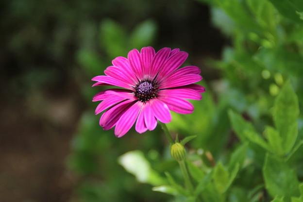 花壇の花 D8941