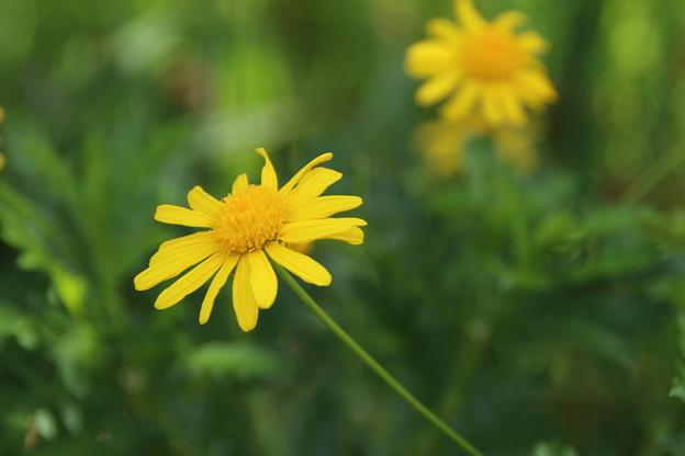 花壇の花 D8942