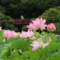 蓮_公園 D8925