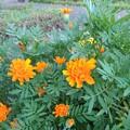 遊歩道の花 K644
