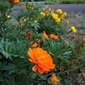 遊歩道の花 K645
