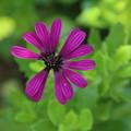 花壇の花 D9114