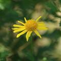 花壇の花 D9112