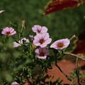 花壇の花 D9111