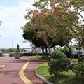 土浦港の公園 D9125