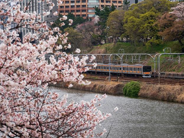 市ヶ谷桜と209系