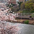 Photos: 市ヶ谷桜と209系
