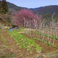 Photos: 山里の春