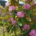 石楠花の杜