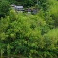 緑の中の家