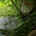 緑と岩の道