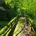 Photos: 苔の石橋
