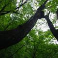 森に聳える樹