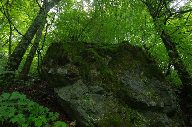 Photos: 苔生す岩