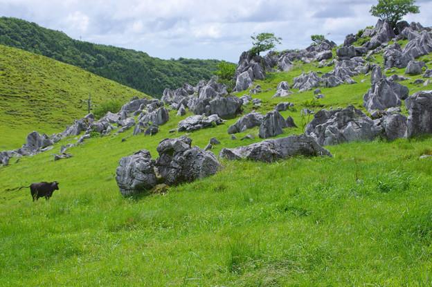 Photos: 石灰岩の牧場