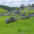 石灰岩の牧場
