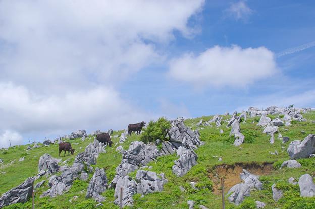 Photos: 五段城の牧場