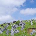 五段城の牧場