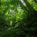 森緑の世界