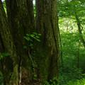 Photos: 三本木