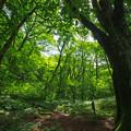 ケヤキ平の樹