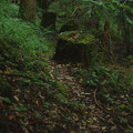 滝への杣道