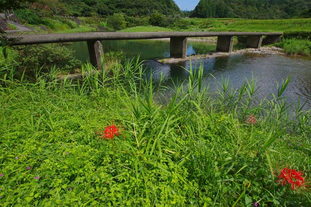 Photos: 川辺に彼岸花