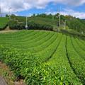 山の上は茶緑色