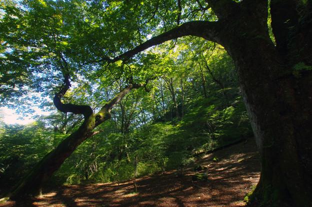 舞踊する樹々