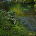 秋緑の渓谷