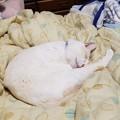 Photos: 先に寝ちゃった