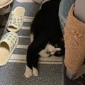 Photos: 落ちる猫