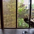 Photos: 古民家カフェの窓辺