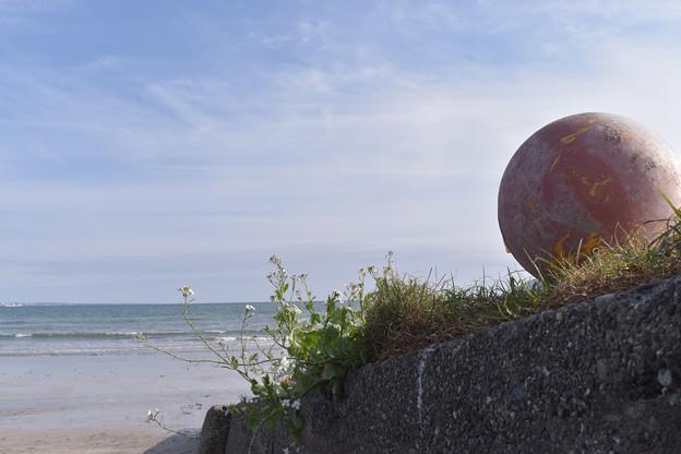 Photos: 海を見ていたブイ