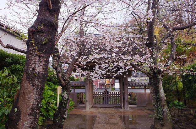 雨上がりの極楽寺