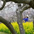 Photos: 菜の花&白梅