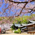 けしご山布施神社の桜NO.1