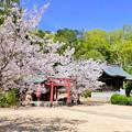 けしご山布施神社の桜NO.2