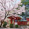 けしご山布施神社の桜NO.3