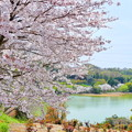 種松山の桜