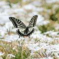 蝶の優雅な舞NO.2は
