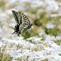 蝶の優雅な舞NO.3